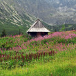 Stock Photo: Mountain hut in Tatra, Poland