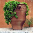 Ancient greek terracotta flowerpot — Stock Photo