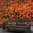 Wooden bench and red ivy covered wall — Stock Photo #33127393