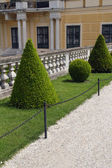 Trimmed hedges at the Schonbrunn Palace in Vienna, Austria — Stock Photo