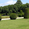 Regular hedges and bushes in Schonbrunn garden in Vienna, Austria — Stock Photo