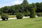 Pravidelné živých plotů a keřů v schonbrunn zahradě ve vídni, rakousko — Stock fotografie