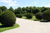 Well-kept regular hedges and bushes in Schonbrunn garden in Vien — Stock Photo