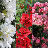 Collection of flowers: pink, red and white — Stock Photo