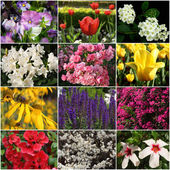 Collection of colorful flowers — Stok fotoğraf