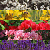Collection of colorful flower banners or background — Stockfoto