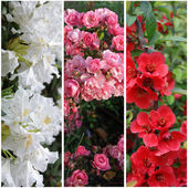 Collection of flower banners: white, pink and red — Stock Photo