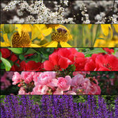 Set of beautiful flowers banners — Stok fotoğraf