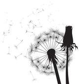 Black and white vector dandelions — Stock Vector
