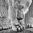 Photo: Polar monotone