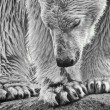 Stock Photo: Polar monotone