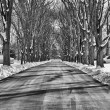 Tree street winter — Stockfoto