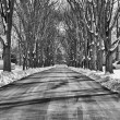 Stock Photo: Tree street winter