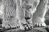 Polar monotone — Stock Photo