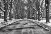Tree street winter — Stock Photo