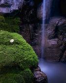 Moss falls — Stock Photo