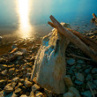 Stock Photo: Driftwood Sunset