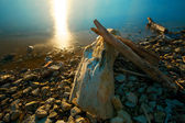 Driftwood Sunset — Stock Photo