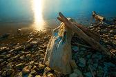 Západ slunce naplavené dříví — Stock fotografie