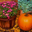 Stock Photo: Harvest Colors