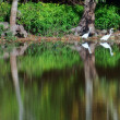 Wading reflections — Foto Stock