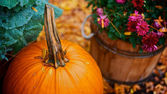 Pumpkin time — Stock Photo