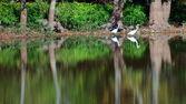 Reflexões vadeando — Foto Stock