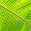 Close up of fresh banana leaf — Stock Photo