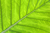 Tropical leaf green background — Stock Photo