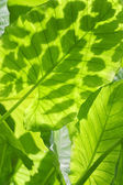 Exotic leaf background with shadows — Stock Photo