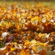 Beautiful natural autumn background with fallen leaves of Maple tree on ground. — Foto Stock #37501857