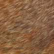 Stock Photo: Macro shot of red fox fur.