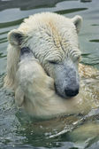 Polar bear mother is bathing her cub in the pool. — Stock Photo