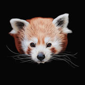 An eye to eye grunge style portrait of a cute red panda, isolated on black background. — Stock Vector