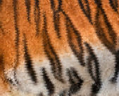 Colorful abstract texture of Siberian tigress with orange, black and white stripes. — Stock Vector