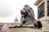Lion Statue at Trafalgar Square, London, UK — Stock Photo