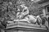 Statua del leone, new york city — Foto Stock