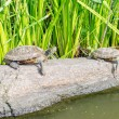 Turtles on the rocks, Central Park, New York — Stock Photo #30304079