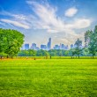 central park, manhattan — Foto Stock