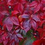 Natural autumn background — Stock Photo