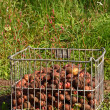 Stock Photo: Potatoes in cage