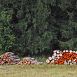 Firewood stacks — Stock Photo
