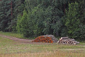 Wood stacks — Stock Photo