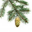 Fir branch — Stock Photo #13819056