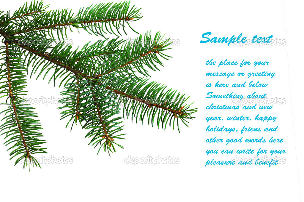 Fir branch on white background with custom text placeholder for Christmas greeting card design — Stock Photo #13819065