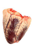 Beef heart — Stock Photo