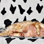 Lying cat — Stock Photo #21417271