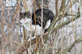 Spring cat — Stock Photo