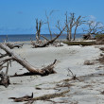 Driftwood on Jekyll Island — Stock Photo #12557959