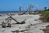 Driftwood on Jekyll Island — Stock Photo